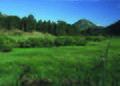 NRCSCO01004 - Colorado (1399)(NRCS Photo Gallery).jpg