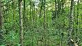 NSG Großes Everstorfer Moor 002.jpg