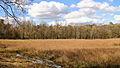 Nationaal Park Drents-Friese Wold. Locatie Dieverzand 009.JPG