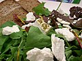 Native Pepper Chevre Salad with 100% Rye Bread - Milawa Cheese (65310314).jpg