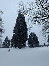 Naturdenkmal Schloss Wetzlas 02.jpg