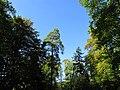Naturpark - NORDSCHWARZWALD - panoramio.jpg