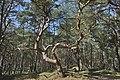 Naturpark Insel Usedom bei Trassenheide.jpg