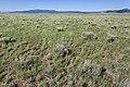 Near Coyote Canyon - Flickr - aspidoscelis (7).jpg