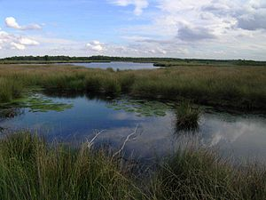 De Groote Peel National Park - Image: Netherlands Grote Peel lake