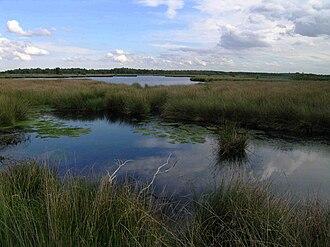 De Groote Peel National Park - Image: Netherlands Grote Peel lake