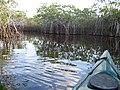 Noble Hammock Canoe Trail (1), NPSphoto (9099279043).jpg