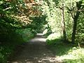 North Downs Way - geograph.org.uk - 51383.jpg