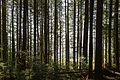 North Vancouver Forest.jpg