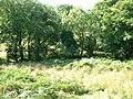 Nr Bryngyrnos - geograph.org.uk - 53525.jpg