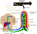 Nutrient absorbtion to blood and lymph.png