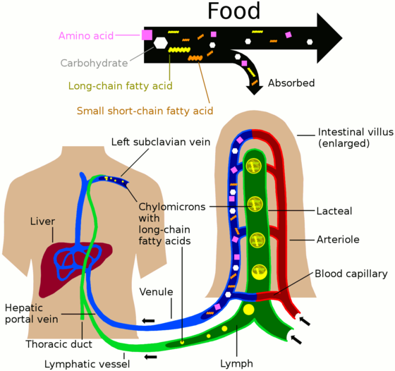 Nutrients in food are absorbed via intestinal vili (greatly enlargened in the picture) to blood and lymph. Long-chain fatty acids (and other lipids with similar fat solubility like some medicines) are absorbed to the lymph and move in it enveloped inside chylomicrons. They move via thoracic duct of the lymphatic system and finally enter the blood via the left subclavian vein thus bypassing the liver's first pass metabolism completely. Nutrient absorbtion to blood and lymph.png