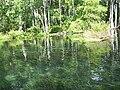 Ocala Silver River09.jpg