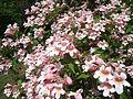 Odessa Main Botanical garden 052.jpg