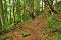 Offa's Dyke Path in Passage Grove (9657).jpg