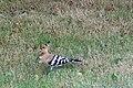 Oiseau-prunierwiki-1.jpg