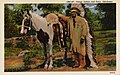 Oklahoma - Osage Indian and Pony (NBY 431396).jpg