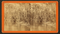 Oklawaha River, Florida. Palmetto Landing, looking up, from Robert N. Dennis collection of stereoscopic views.png