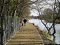 One Man and his Dog beside Beverley Beck - geograph.org.uk - 734289.jpg