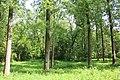 Oombergse bossen Zottegem 02.jpg
