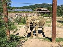 opel zoo - wikipedia