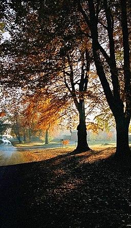 Oulton Park, Autumn - geograph.org.uk - 265902