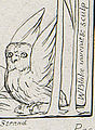 Owl-Illustrations of the Book of Job - object 12 - detail.jpg