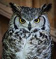 Owls @ Dragonheart, Enschede (9549683532).jpg