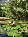 Oxford tropical greenhouse.jpg