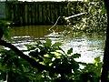 POL-Rezerwat przyrody Buczyna nad Słupią 011.jpg