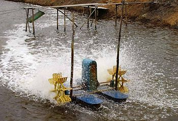 A 1 horsepower paddlewheel aereator used in a shrimp pond in Indonesia.