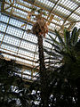 Palm house (Schönbrunn) 'Sisi' 20080212 afternoon mood.jpg