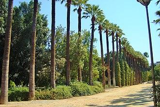 Nicosia municipal gardens - Image: Palm trees in the historical Municipal gardens of Nicosia in Republic of Cyprus