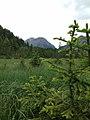 Paluaccio Oga vegetazione.jpg