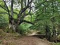 Parque del Gorbea (09).jpg