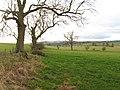 Pasture land near Keepwick Farm - geograph.org.uk - 612837.jpg