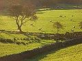 Pastures, Lorton - geograph.org.uk - 1041939.jpg