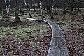 Path to the enchanted forest at Gryteskog Sweden.jpg