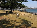 Pelicans ^1 at Port Macquarie - Taken on the Wednesday, 16th September 2009 at 12-33pm. - panoramio.jpg