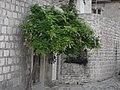 Perast, Montenegro - panoramio - ines lukic (18).jpg