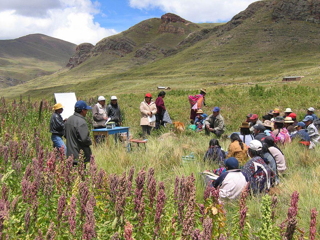 Blog Naturaleza educativa 1024px-Peru_Chenopodium_quinoa La quinoa, un superalimento para la nutrición y seguridad alimentaria mundial