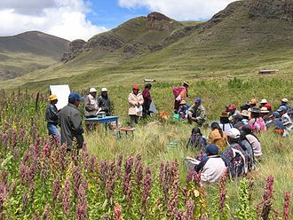 Quinoa - Farmer field school on crop husbandry and quinoa production, near Puno, Peru.