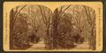 Philadelphia. Foot Path, Fairmount Park,, by Roberts & Fellows.png
