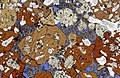Photomicrograph of rock thin section Gabbroic inclusion.jpg