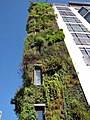 Piccadilly, green wall. - panoramio.jpg