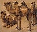 Pieter Boel - Study of camels.jpg