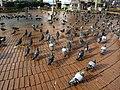 Pigeons in Kadıköy, Istanbul, Turkey - 20130106.jpg