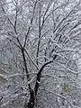 PikiWiki Israel 29207 Snow in Jerusalem.JPG