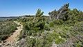 Pine trees, Île Saint-Martin, Gruissan cf02.jpg