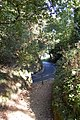 Pine walk, Shaftesbury, Dorset - geograph.org.uk - 1007844.jpg